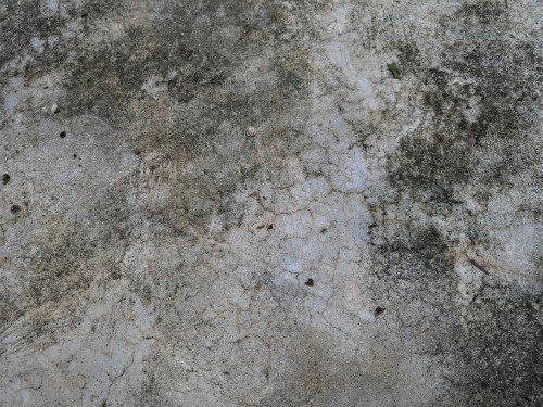 moldy floors